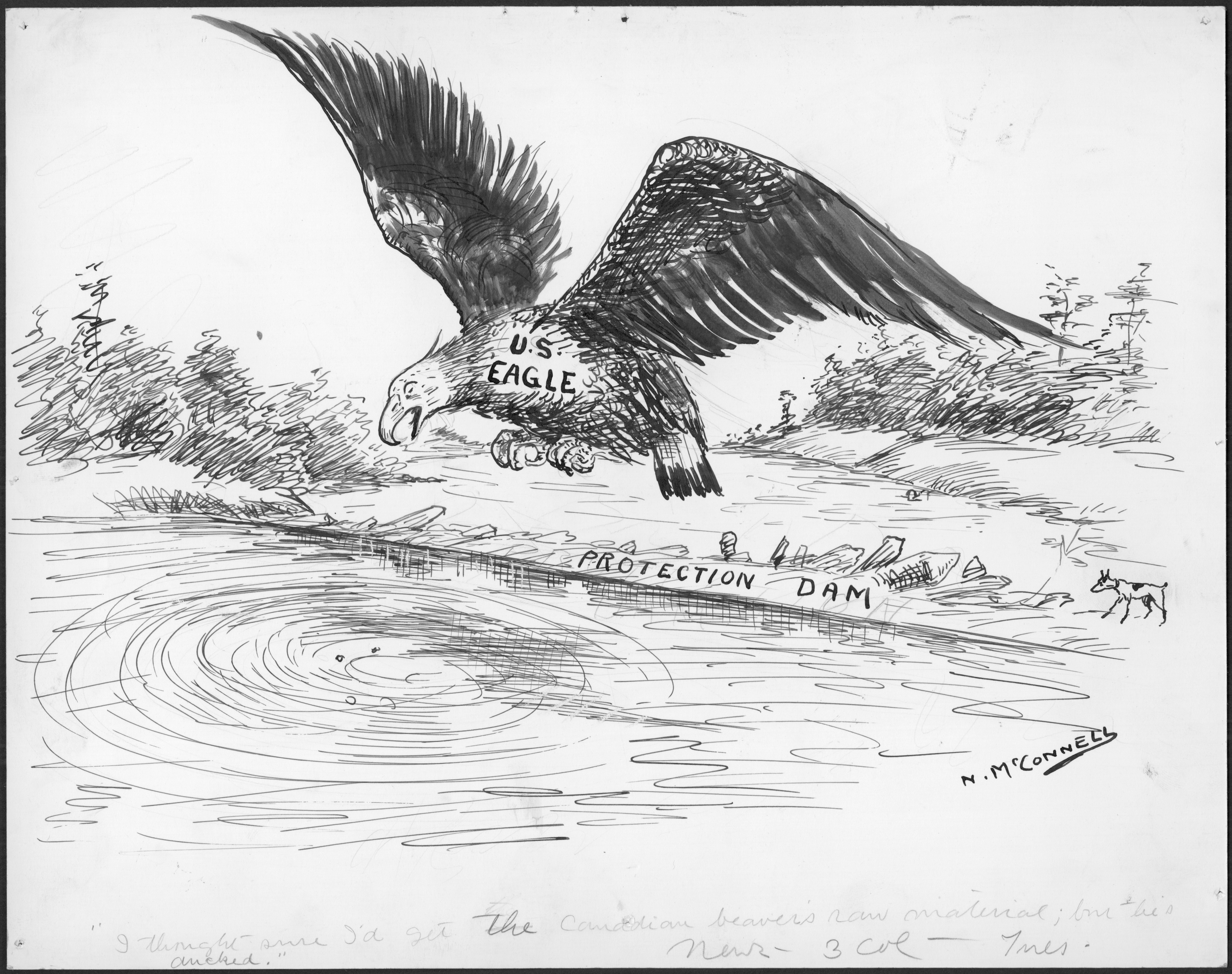 """An eagle hunts for a beaver Soaring above a beaver pond, shored up by a beaver """"PROTECTION DAM,"""" a """"U.S. EAGLE"""" looks for the beaver it was hunting, wings outstretched, with a look of astonishment on its face. Below in the water, ripples on the pond suggest something has dove below the surface."""